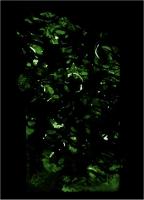 Glow16Night